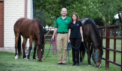 Windmill stables owners