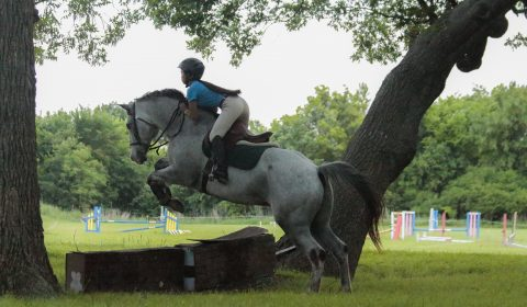 Horse shows eventing