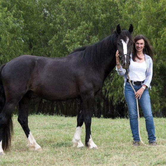 Dallas Horses Windmill Stables Debbie Lewis